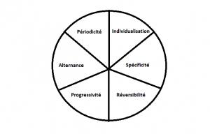 6 principes d'entrainement